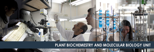 Plant Biochemistry and Molecular Biology Unit